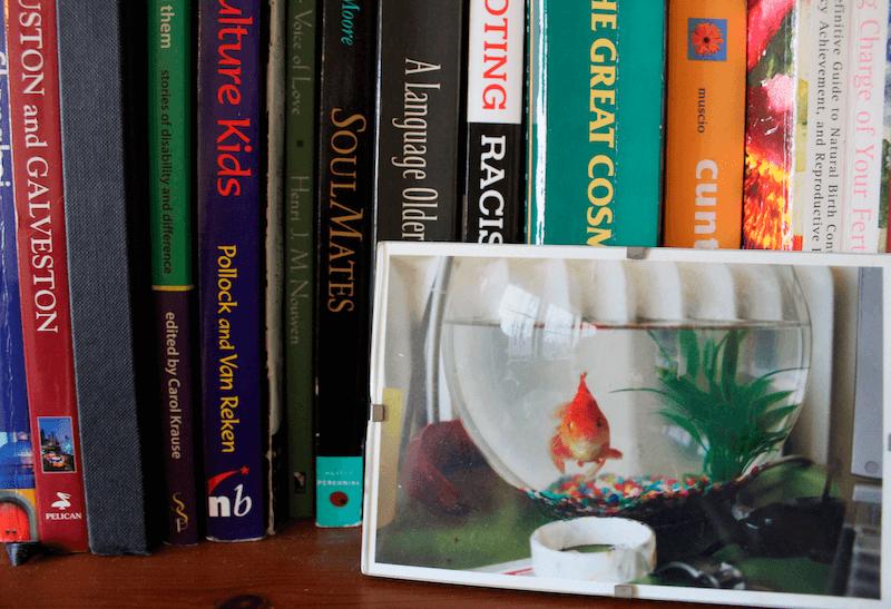 Peter Hoegs Book Thea Lims Bookshelf